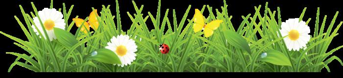 Анимационные картинки цветов для презентаций